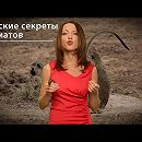 Женские секреты приматов