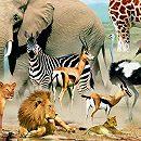 Что мы знаем о животных